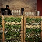 Apple crates with greenery