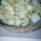 Fresh white rose petals