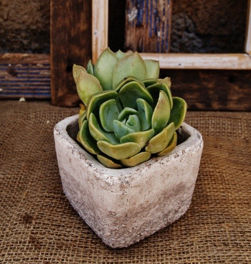 Small square clay pot.jpg