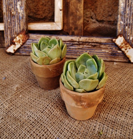 Small terracotta pots.jpg
