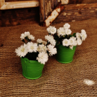 Tiny green buckets.jpg